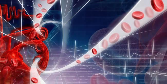 血行促進作用を持つ育毛剤の成分|育毛剤徹底比較-薄毛対策研究所